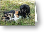 Calico Cat Greeting Cards - Fine Friends Greeting Card by Al Powell Photography USA