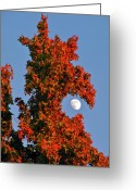 Orange Greeting Cards - Fire Dragon Tree Eats Moon Greeting Card by CML Brown