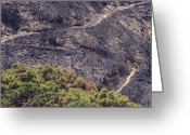 Desolate Landscapes Greeting Cards - Firefighters Monitoring The Blaze Greeting Card by Rich Reid