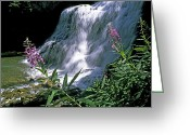 Fireweed Greeting Cards - Fireweed And Ouzel Falls, Near Big Sky Greeting Card by Gordon Wiltsie