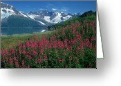 Fireweed Greeting Cards - Fireweed and Serpentine Glacier Greeting Card by Tim Grams