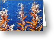 Fireweed Greeting Cards - Fireweed flower Greeting Card by Heiko Koehrer-Wagner