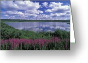 Fireweed Greeting Cards - Fireweed, Lake And Clouds Reflecting Greeting Card by Rich Reid