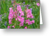 Mark Lehar Greeting Cards - Fireweed Greeting Card by Mark Lehar
