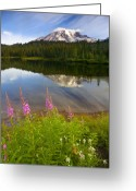 Fireweed Greeting Cards - Fireweed Reflections Greeting Card by Mike  Dawson