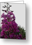 Fireweed Greeting Cards - Fireweed Greeting Card by Ron Bissett