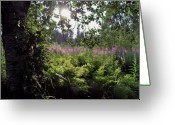 Fireweed Greeting Cards - Fireweed Greeting Card by Terence Davis
