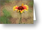 Flowers Pictures Greeting Cards - Firewheel 2 Greeting Card by Ernie Echols