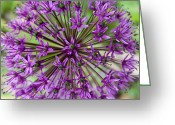 Green. Organic Greeting Cards - Fireworks Greeting Card by Elizabeth Richardson