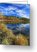 Aster  Greeting Cards - First Fall Foliage and Asters Greeting Card by John Burk