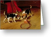 Beagle Greeting Cards - First Introduction Greeting Card by Wright Barker