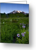 Wildflowers Greeting Cards - First Light Greeting Card by Mike  Dawson