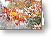 Winding Road Greeting Cards - First Snow Greeting Card by Thomas R Fletcher