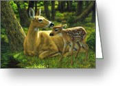 Whitetail Deer Greeting Cards - First Spring Greeting Card by Crista Forest