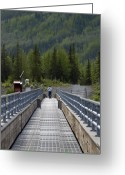 Bridge Greeting Cards - First Steps Down New Roads Greeting Card by Denise McAllister