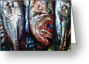 Stock Photography Greeting Cards - Fish Eyes 3 Greeting Card by Skip Nall