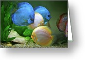 Swimming Photo Greeting Cards - Fish In Water Greeting Card by Vietnam