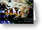 Saltwater Fish Greeting Cards - Fish stripes Clownfish Greeting Card by Toni Hopper