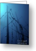 Misfortune Greeting Cards - Fish swimming around the mast of the Le Voilier shipwreck underwater Greeting Card by Sami Sarkis
