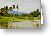 Ecosystem Greeting Cards - Fisherman in Rice Paddy Greeting Card by John Buxton