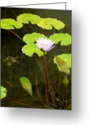 Lilly Pad Greeting Cards - Fishin Around Greeting Card by Kristin Osterman