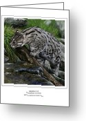 Felidae Digital Art Greeting Cards - Fishing Cat Greeting Card by Owen Bell