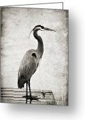 Canon 7d Greeting Cards - Fishing from the Dock Greeting Card by Scott Pellegrin