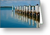 Perched Birds Greeting Cards - Fishing From The Pier Greeting Card by Michelle Wiarda