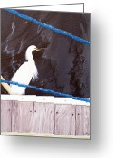 Seabirds Greeting Cards - Fishing Spot Greeting Card by Karen Devonne Douglas