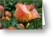 Rosaceae Greeting Cards - Fit for a Queen Greeting Card by Rona Black