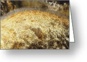 Rotted Greeting Cards - Five Day Growth Of Bread Mould Greeting Card by Vaughan Fleming.
