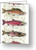 Fish Painting Greeting Cards - Five Salmon Species  Greeting Card by JQ Licensing