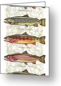 Trout Stream Greeting Cards - Five Trout Panel Greeting Card by JQ Licensing