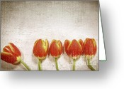 Soft Grunge Greeting Cards - Five tulips Greeting Card by Sandra Cunningham