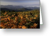 Mountains Photographs Greeting Cards - Flame Azalea and the Blue Ridge Mountains Greeting Card by Rob Travis
