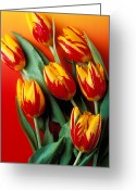 Tulip Greeting Cards - Flame tulips Greeting Card by Garry Gay