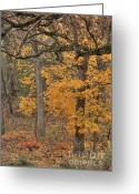 Suburbs Greeting Cards - Flaming Autumn Grove Greeting Card by Deborah Smolinske
