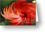 Digital Flower Greeting Cards - Flaming Hibiscus Greeting Card by Cheryl Young