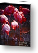 Zoo Greeting Cards - Flamingo Greeting Card by Elena Elisseeva