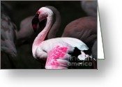 Portraits Mixed Media Greeting Cards - Flamingo Greeting Card by Wingsdomain Art and Photography