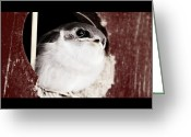Passerines Greeting Cards - Fledgling Curiosity  Greeting Card by Kathy Sampson