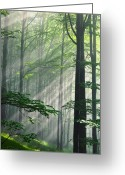 Scenery Greeting Cards - Fleeting Beams Greeting Card by Evgeni Dinev