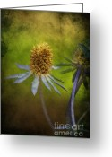 Pflanzen Greeting Cards - Fleur dautomne Greeting Card by Angela Doelling AD DESIGN Photo and PhotoArt