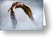 Eagle In Flight Greeting Cards - Flight of Fancy Greeting Card by Julie L Hoddinott