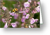 Bumble Greeting Cards - Flight of the Bumble Bee Greeting Card by Reflective Moments  Photography and Digital Art Images