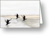 David Lade Greeting Cards - Flight of the Cormorants Greeting Card by David Lade
