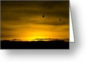 Most Photo Greeting Cards - Flight of the golden Greeting Card by Steven Poulton