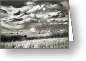 Vistas Greeting Cards - Flint Hills Prairie Greeting Card by Thomas Bomstad