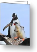 Kid Photo Greeting Cards - Flipper Flexing Greeting Card by Tony Beck
