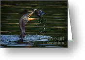Phalacrocorax Auritus Greeting Cards - Flippin Fish Greeting Card by Carl Jackson